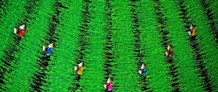 gallery – Vietnam