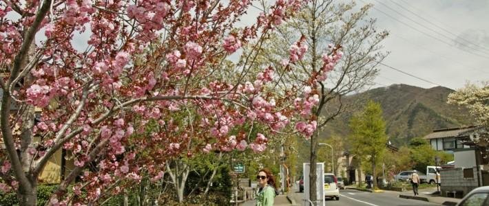 helpixy tu i tam: 6. farmerzy w kraju kwitnącej wiśni